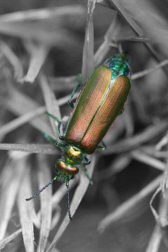 Französischer Käfer - Farbe / Schwarz  und Weiß von Lisette Tegelberg - Zegwaard