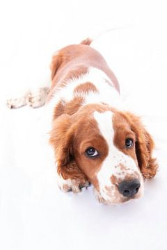 Hond von Florence Aafjes