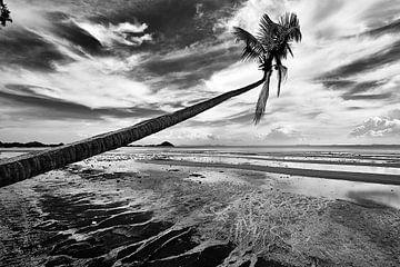 Launische Palme von Graham Forrester