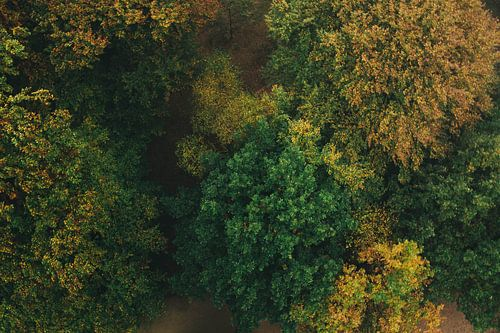 Bos van Boven van