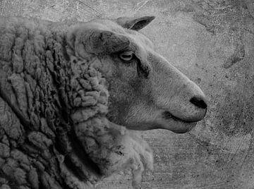 Schafe von Marjolein van Middelkoop