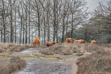 Gruppe von Bisons in der Landschaft von Anita Smink