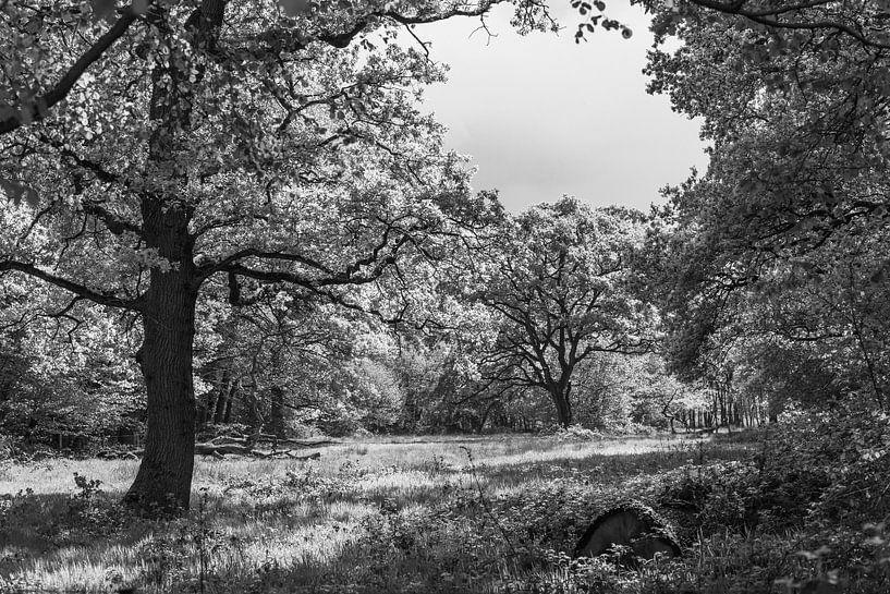Bos bij Smeerling in zwart/wit van Ina Muntinga
