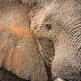 Close up van een olifant van Yvonne Bekkers