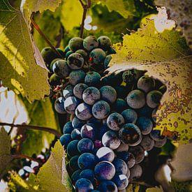 Een tros druiven (Provence) van Daphne Groeneveld