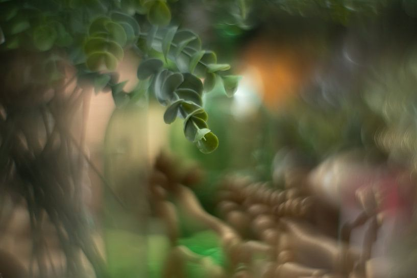 vetplantje von Paul Glastra Photography