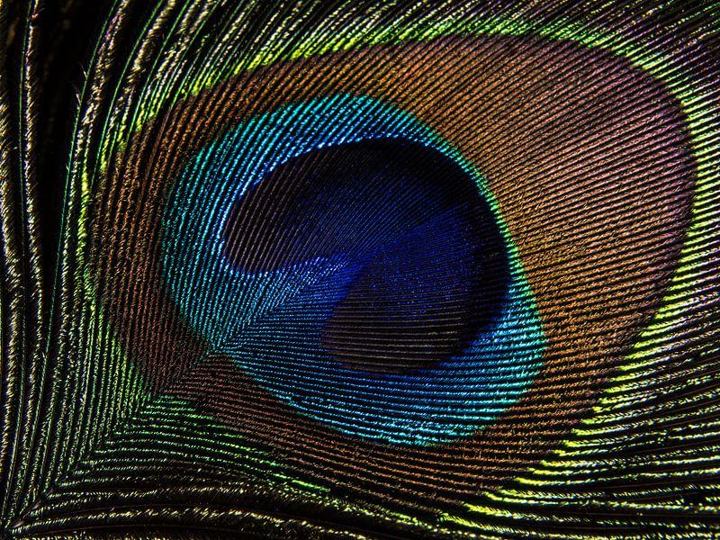 Pauwenveer in het licht (close-up) van Marjolijn van den Berg