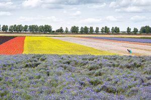 Kleurrijk bloemenveld op eiland Tholen van Arie Storm