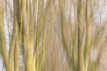 abstracte boomstammen van Tania Perneel