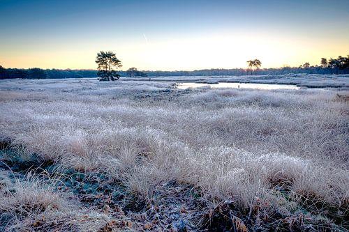 Een koude ochtend op de Sonse Heide. van