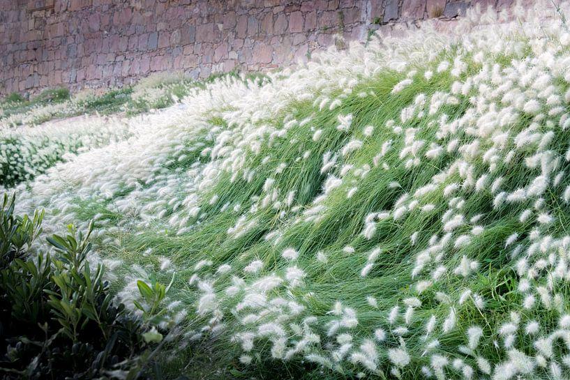 Golven van gras en zachtheid von Martijn Koevoets