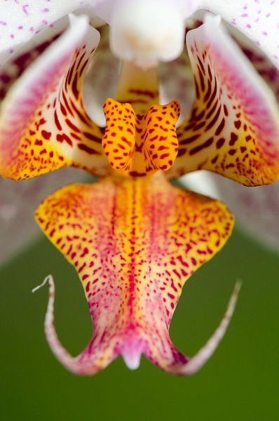 Orchidee binnenkant