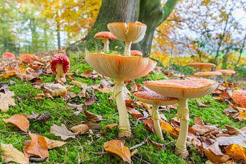 Bosgrond met bladeren en vliegenzwammen van Ben Schonewille