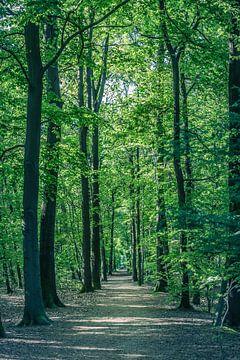 Hoge bomen op landgoed Visdonk (Roosendaal, Brabant) van Fotografie Jeronimo