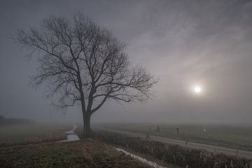 Boom in weiland langs sloot van Moetwil en van Dijk - Fotografie