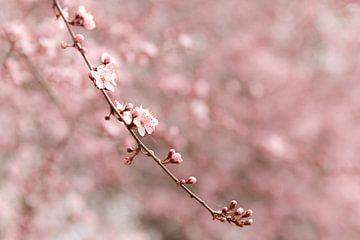 Branche à la fleur de cerisier rose (1) sur Mayra Pama-Luiten