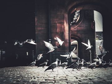 Birds Birds Birds von Iman Azizi