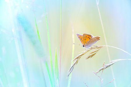 Kleine vuurvlinder op grashalm en spannende achtergrond