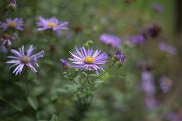Schmetterlingsgarten von harm Henstra