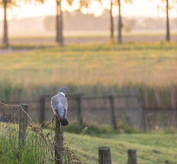 duif op het paaltje van Tania Perneel