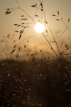 Fijn gras in zonlicht von Yvonne van der Meij