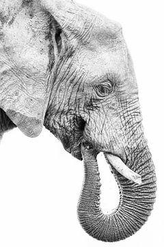 Jonge olifant in profiel, zwart wit van De Afrika Specialist