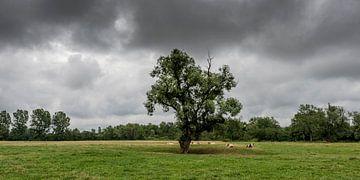 Landschap met koeien, eenzame boom, grasveld en dreigende lucht. van Dirk Huckriede