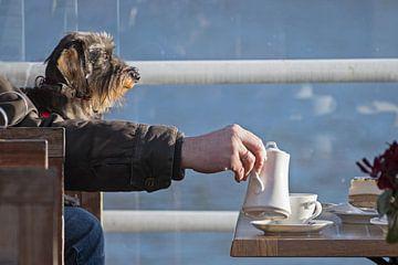 grappige hond, ruwharige teckel met een man's arm schenkt koffie in een kopje, kopieerruimte van Maren Winter