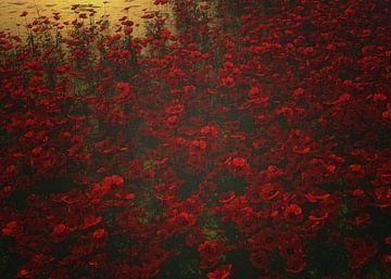 Mohnblumen im Regen von Jan Keteleer