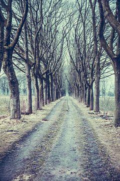 """Der """"Snollevendreef"""" (auf dem Gut Visdonk in Roosendaal) im Winter von Fotografie Jeronimo"""