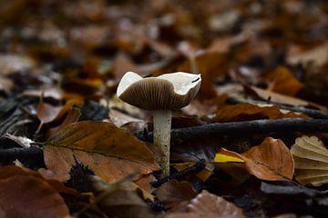 Herfst paddenstoel van Nathalie Dirks