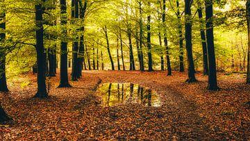 Autumnmood | Hof Espelo (1) von Rob van der Pijll