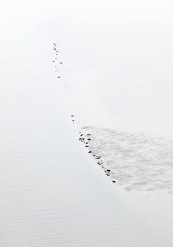 Robben auf einer trocknenden Sandbank. von Sky Pictures Fotografie