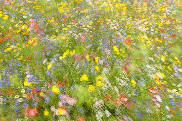 Sommerfeld Blumen .........., Piet Haaksma von 1x