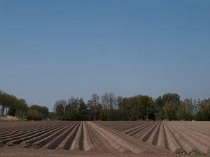 Patroon van landbouwvoren van