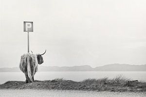 highland visitor van