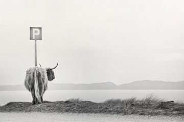 highland visitor von Dorit Fuhg