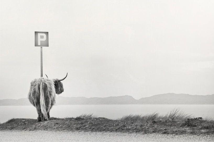 highland visitor van Dorit Fuhg