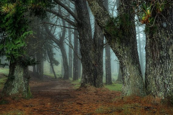 The misty forest....