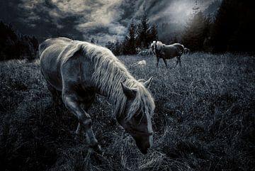 Pferde auf der Wiese von Tejo Coen