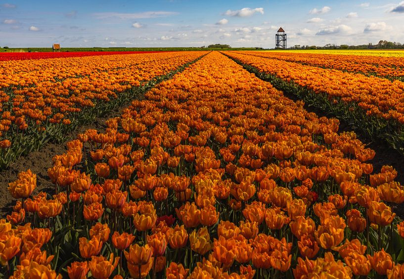wolken boven de tulpen van peterheinspictures