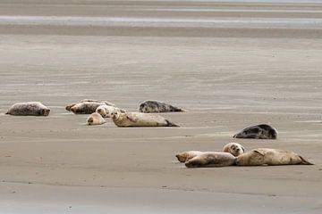 Zeehonden bij Engelsmanplaat van Kees Ham