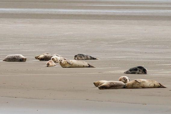 Zeehonden bij Engelsmanplaat