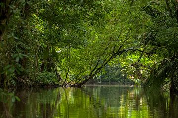 Costa Rica: Tortuguero National Park van Maarten Verhees