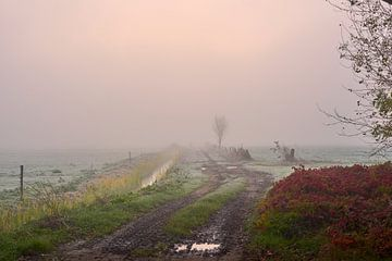 Sonnenaufgang in nebliger Landschaft von Jenco van Zalk