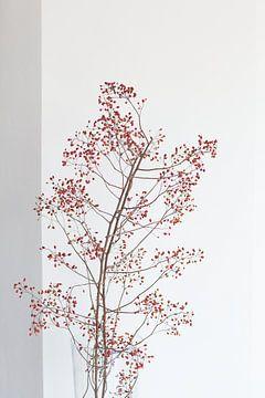 Zweig mit roten Beeren von Janine Bekker Photography