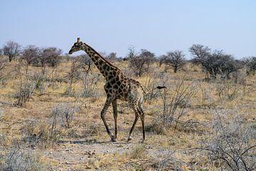 Lopende Giraf van Merijn Loch
