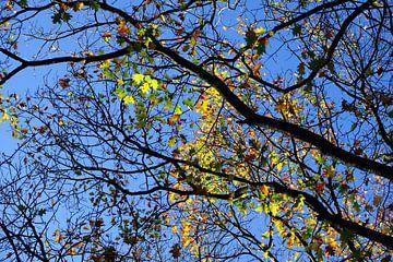 Bomen met herfstkleuren van Folkert Jan Wijnstra