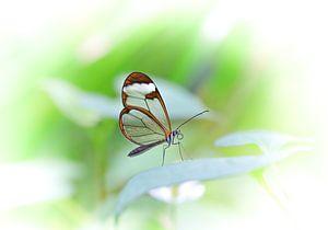 Schmetterling von Willem  Bentink