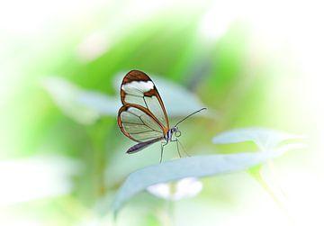 Vlinder van Willem  Bentink